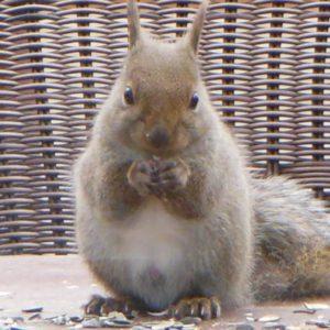 使うほどにゴワゴワになるタオル。ふわふわに育てるタオル見つけました!